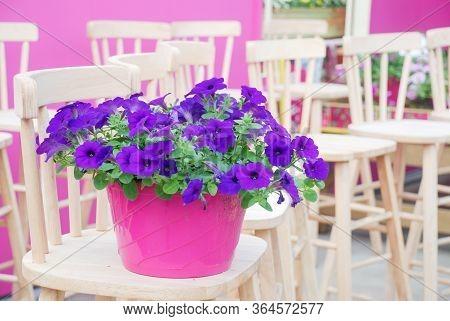 Petunia ,petunias In The Tray,petunia In The Pot, Purple Petunia
