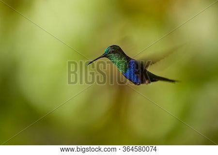 Hummingbird flying mid air, blurred wings