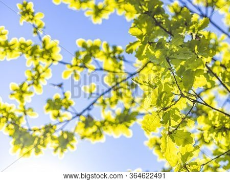 Close Up Green Leaf Nature On Blurred Greenery And Blue Sky Background With Copy Space Under Sunligh