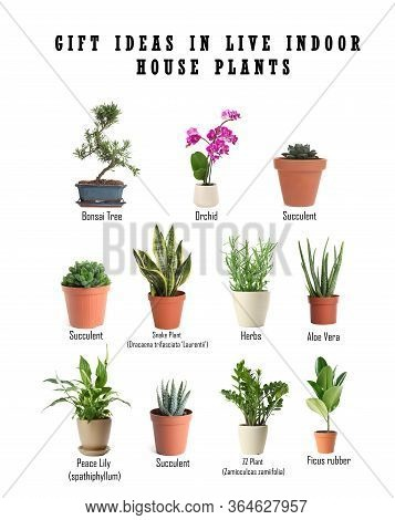 Set Of Different Houseplants On White Background. Best Gifts For Plant Lovers