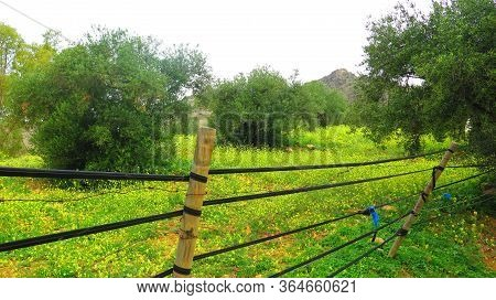 Meadow Behind Rubber Tubing Connected Posts