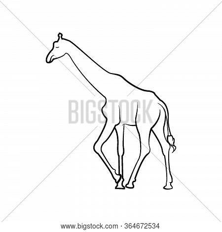 Giraffe Wild Mammal In Kenya African, Neck Long Tall, Camouflage Skin Savanna, Giraffa Silhouette