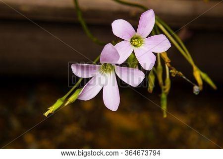 Closeup Flower In Garden