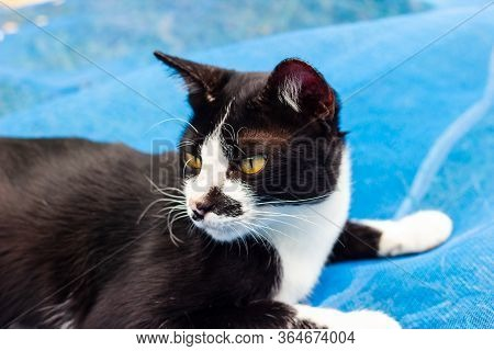 Black And White Cat Cat Lying On A Floor