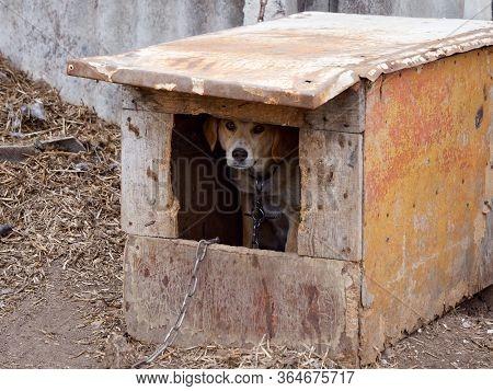Yard Dog Watchman In The Yard Booth