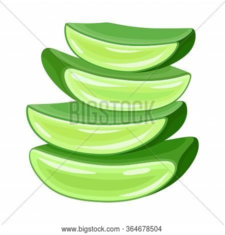 Pile Of Aloe Vera Thick Fleshy Leaves Pieces As Flowering Succulent Plant Vector Illustration