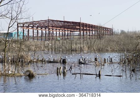 Landscape Pollution Ecology Of The Environment, Lake, River. Seagulls Live In The Contaminated Terri