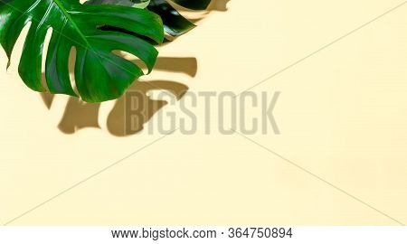 Summer Tropical Mockup With Blank Space For A Text, Top-down View Of Monstera Leaves Under Direct Su