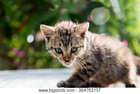 Whisker Cat Have Predator Race Instinct Concept.