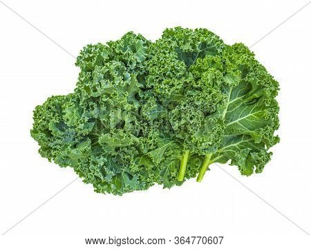 Kale Leaf Salad Vegetable Isolated  On White Background. Creative Layout Made Of Kale Closeup. Flat
