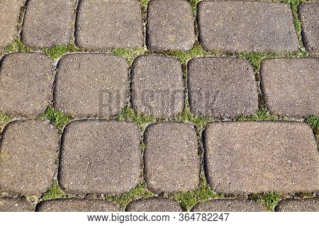An Annual Problem In Front Of The House. Paving Stones With Ingrown Weeds And Moss.