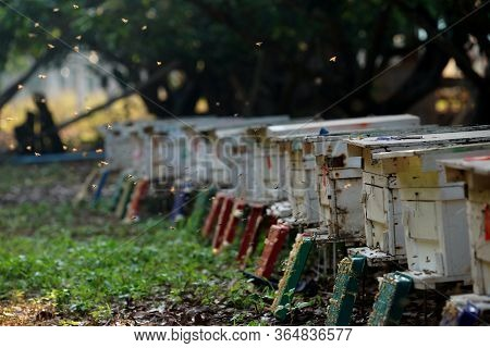 View Of Beekeeping Place In The Orchard,to Produce Honey,beekeeping Concept