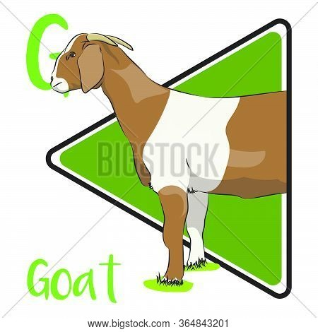 G For The Goat, An Animal With Horns (big Or Small) That Walks With Four Legs And Usually Used For M