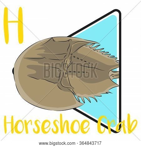 H For Horseshoe Crab, A Water Arthropods That Live Primarily In And Around Shallow Coastal Waters On
