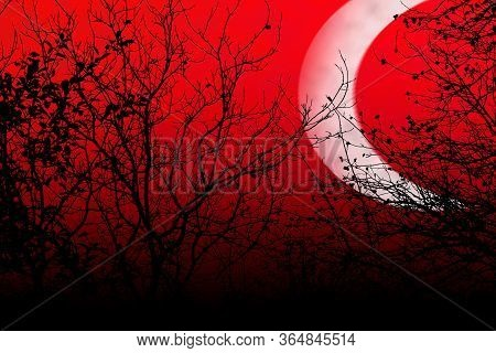 Occulture Landscape Silhouettes. Tree Branches On Deep Red Sky Background At Night Dusk Time. Big Ho
