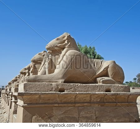 Row Of Ancient Egyptian Ram Headed Sphinxes In The Avenue Outside Karnak Temple At Luxor