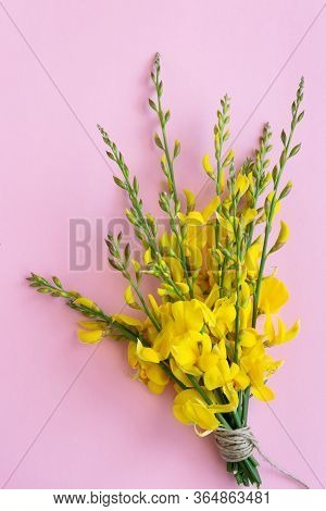 Bunch Of Flowering Gorse On The Pink Background, Space For Text