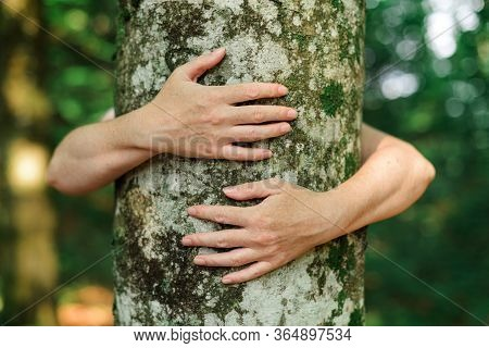 Environmentalist Tree Hugger Is Hugging Wood Trunk In Forest, Female Arms Around The Tree, Selective