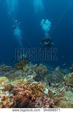 Two Hawksbill Turtles With Two Divers On A Coral Reef.
