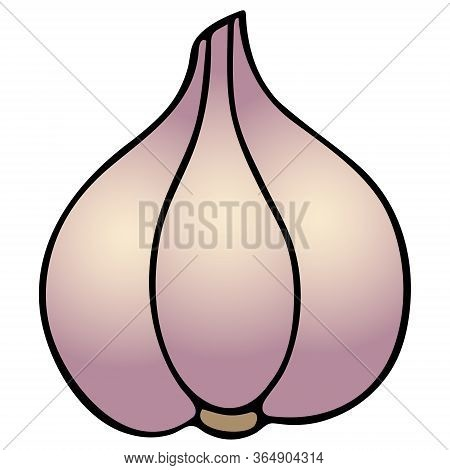 Garlic. Vegetable Culture Contains Vitamin C. Color Vector Illustration. Head On An Isolated White B