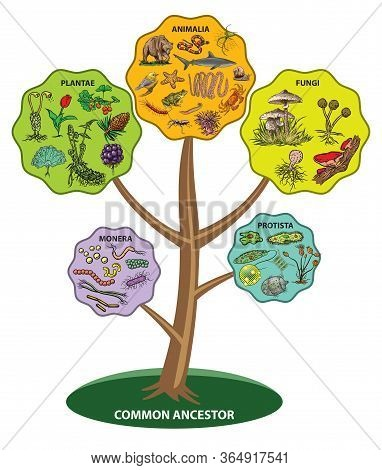 Illustration Shows Five Kingdom Classification System Tree.