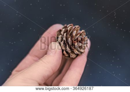 Fir Cone In Hand On A Blurry Blue Background.