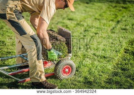 Caucasian Male Gardener Loads Left Over Rolls Of Sod On Wheeled Moving Dolly.