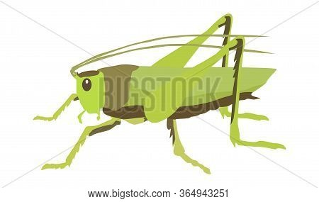 Insect Grasshopper Vector Drawing Isolate On White