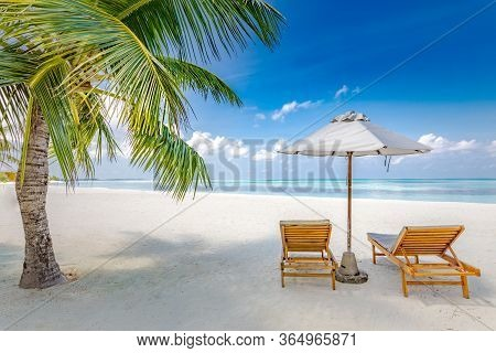 Tropical Beach Nature As Summer Landscape With Lounge Chairs And Palm Trees And Calm Sea For Beach B