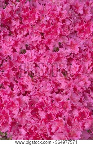 Nature And Botany, Flora And Nature, Flower Petals With Intense Colors For Garden And Park Decoratio