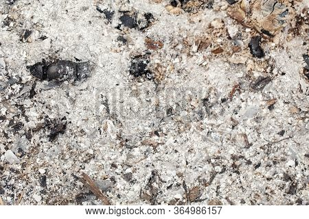 Natural Ash Charcoal Fire Place Texture Background. Closeup Macro Of Old Aged Burnt Wood. Abstract B
