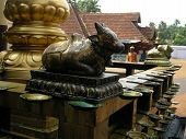 "A small golden bull statue symbolizing ""nandi"" Shiva's consort inside a Hindu temple. Below: Several oil lamps. poster"