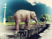 elephant on the cracked road  concept ( photo and hand-drawing elements combined). poster