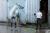 jockey wash horse from hose near stable poster
