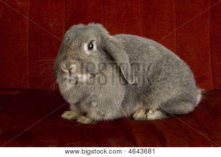 Grey Rabbit On Red Sofa