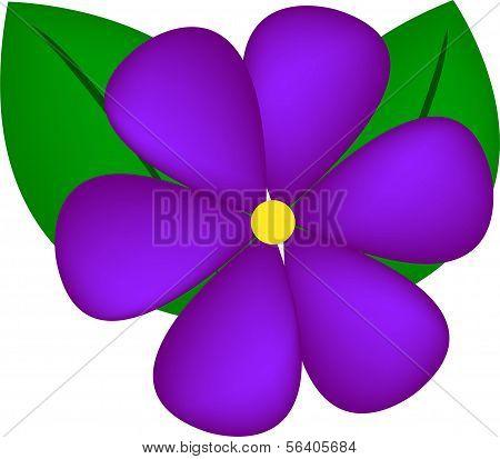 Violet Flower