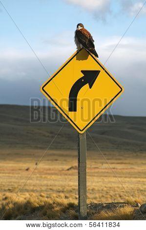 Vogel auf ein Verkehrszeichen