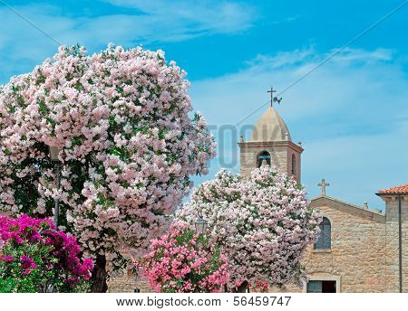 Oleanders By The Church