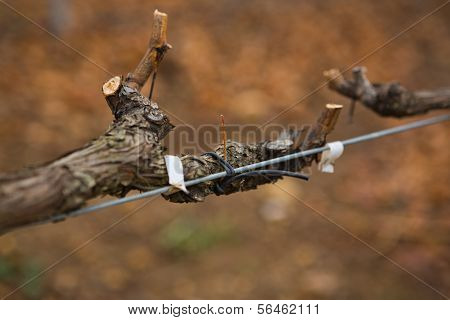 Twig Spinning On Metal Rail In Vineyard