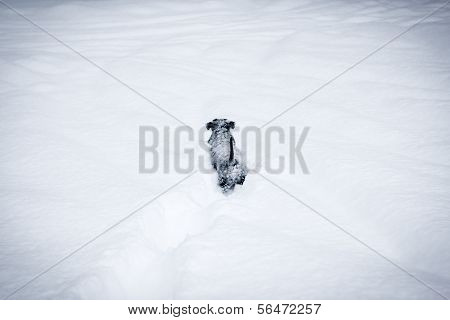 Adorable dog pup playing outside in the very deep snow. poster