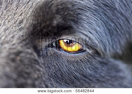 Close Up Of A Wolf