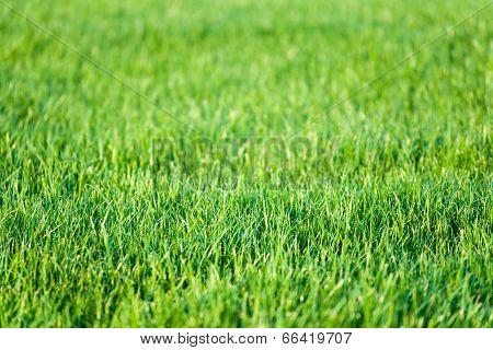 Green Lawn Grass Background