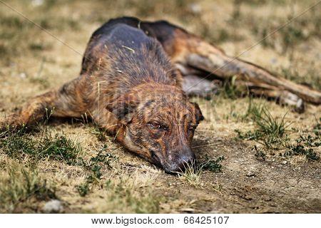 Street dog laying