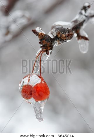 Pair of ice covered berries