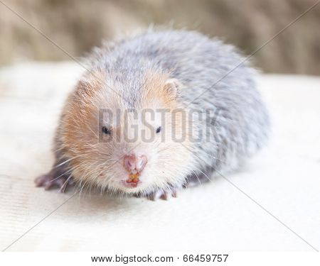 Wildlife Species Of Rodent Family