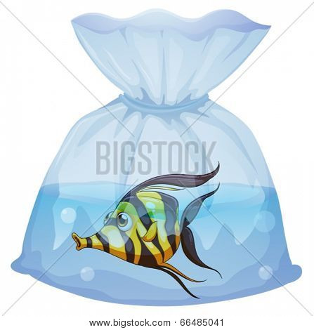 Illustration of a fish inside the plastic container on a white background