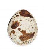 quail egg. Isolated on a white background poster