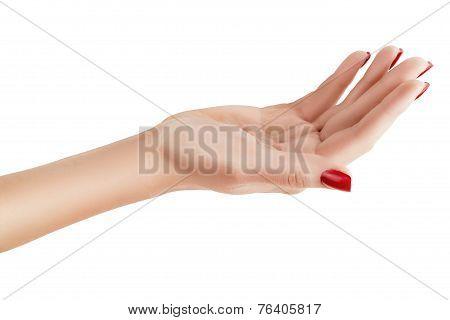 Female Hand Palm Up.