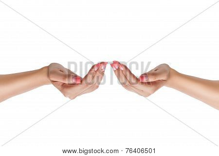 Female Hands With Nail.