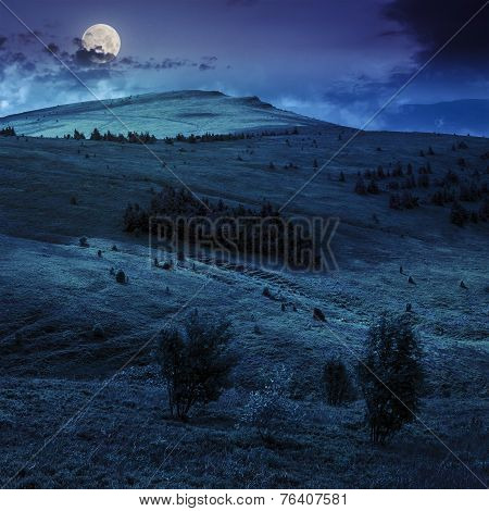 Coniferous Forest On A Hillside At Night
